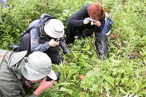 Picture of a mushroom hunters photographing a mushroom.