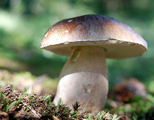 Wild Mushroom Hunting London, by London Where